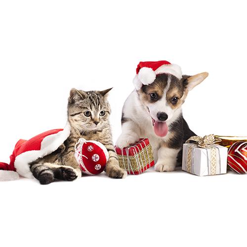 Ideas para celebrar Navidad con nuestras mascotas